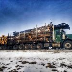 Great Lakes Logging and Firewood - Gallery Image 1