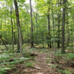 Anderson Woods Nature Preserve - Gallery Image 2
